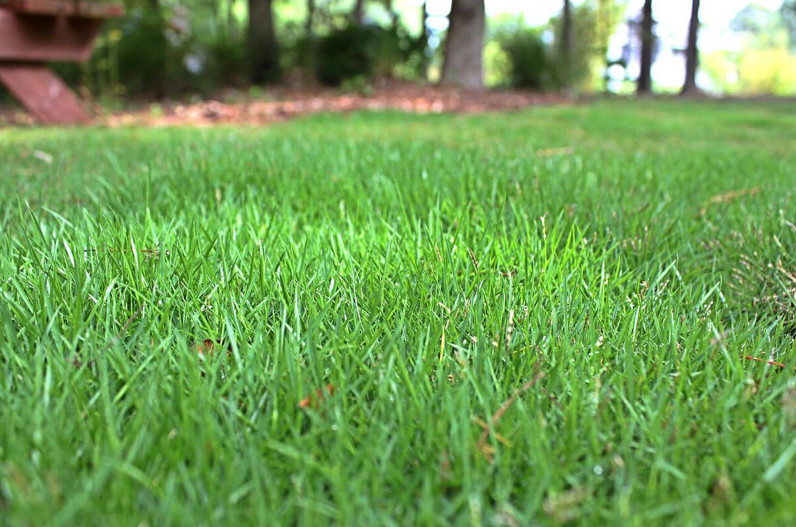 Weed Killer for Zoysia Grass, the Best Fertilizers for Annual Weeds