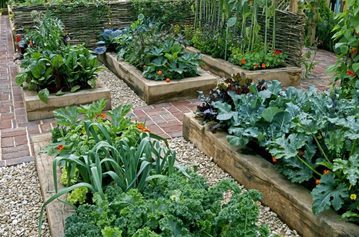 4x8 Raised Bed Vegetable Garden Layout with Several Ideas to Arrange the Plants 2