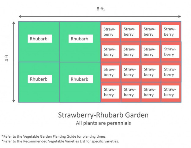 4x8 Raised Bed Vegetable Garden Layout with Several Ideas to Arrange the Plants