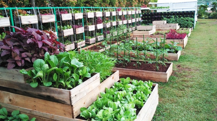 Best Bagged Soil for Vegetable Garden Recommendations with Great Ingredients